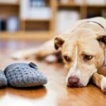 Ghidul stăpânilor de animale pentru automatizarea casei