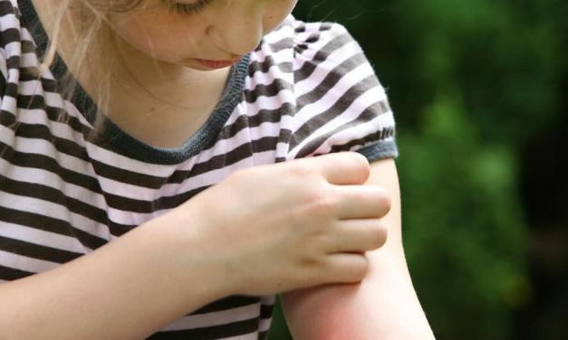 Capcane 100% eficiente împotriva insectelor